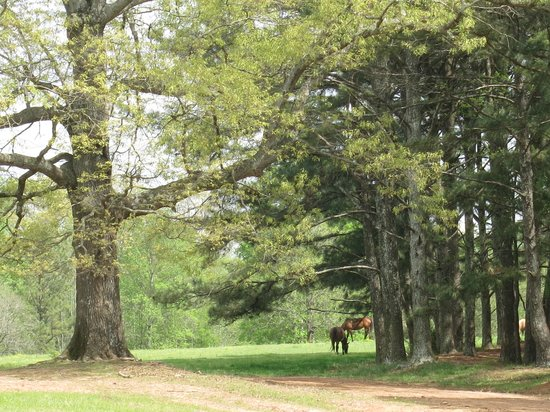 Southern Cross Ranch: Beautiful trails and scenery