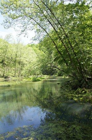 Ha Ha Tonka State Park: The stream from the Springs