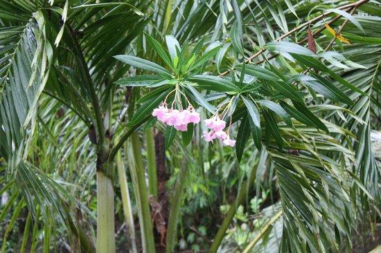Tangkoko Dove Villas : some beautiful nearby flowers
