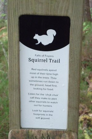 The Falls of Foyers: Red Squirrels