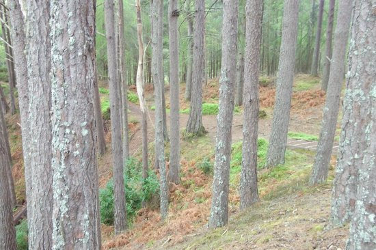 The Falls of Foyers: Woodland at Falls of Foyer