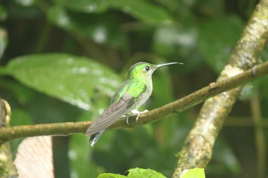 Forest Alive: Hummingbird