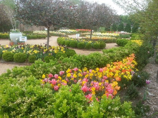 Paul J Ciener Botanical Garden: Bulb Garden 2