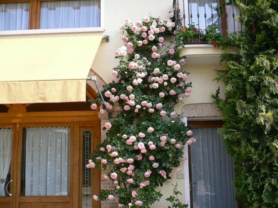 Melo in Fiore: giardino