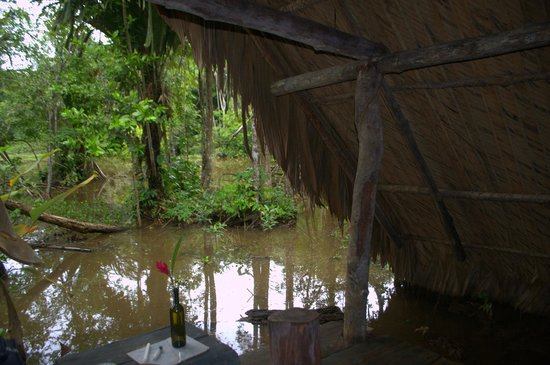 Orinoco Eco Camp: View from your bedroom/hut