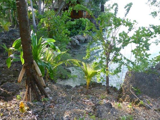 Nabucco Island Resort: Die Insel ist wunderschön bewachsen und gepflegt