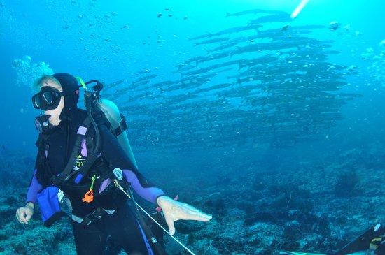 Nabucco Island Resort: Big Fish Country: Barracudas über Barracudas !