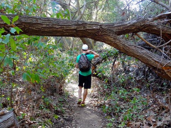 Topanga State Park : en route to the waterfall