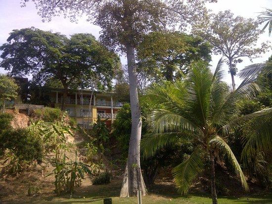 Royal Decameron Golf, Beach Resort & Villas : Végétation