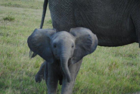 Cheetah Tented Camp: Elefantín