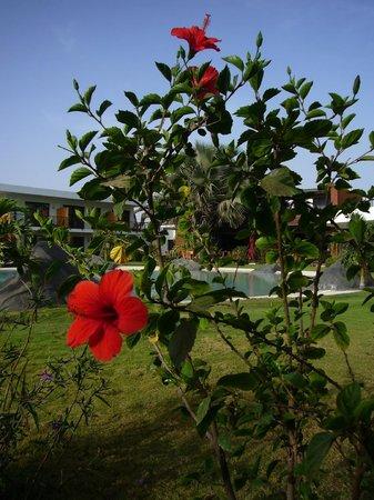 Hotel Keparanga : Depuis la terrasse