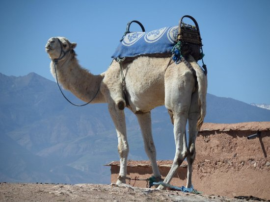Colours of Morocco Day Tours: A friend we met along the way ;-)