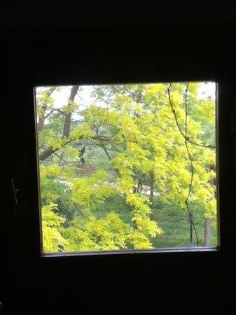 Villa il Poggiale Dimora Storica : dalla finestra del bagno