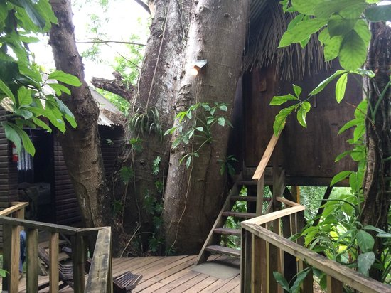 Parrot Nest Lodge: The shared balcony entrance to the two tree houses.
