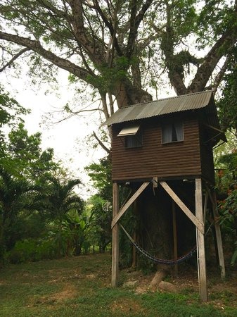 Parrot Nest Lodge: One of the tree houses.