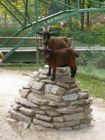 Freizeitpark Lochmuehle: Tier zum Streicheln