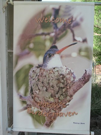Tucson Audubon's Paton Center for Hummingbirds: Violet Crowned Hummer    You will see them there.