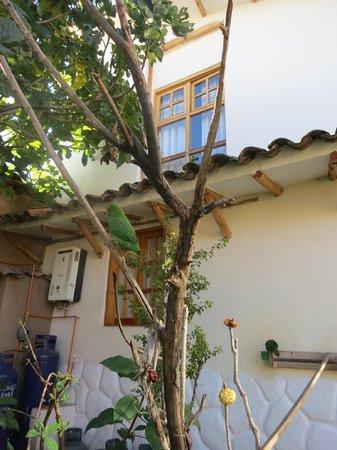 Casona La Recoleta: Parrots in the garden