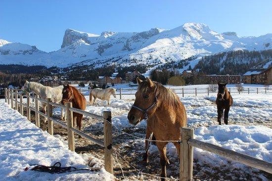 Le Hameau du Puy : centre équestre à côté des chalets
