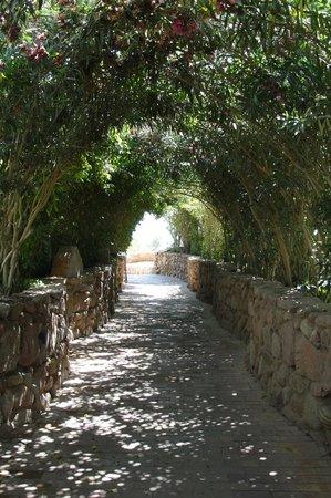 Domina Hotel & Resort Harem: красивая дорога к морю...