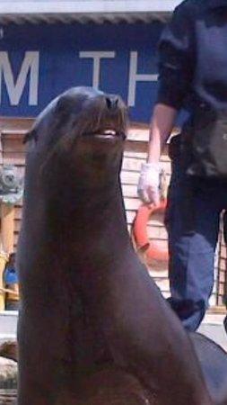 Blue Reef Aquarium: Sea lion smiling for us .. Highlight of the trip .. Xx