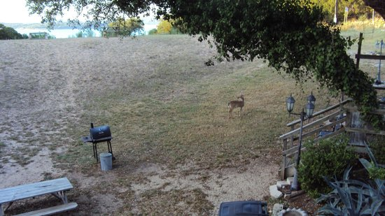 Holiday Lodge on Canyon Lake : Deer that will eat out of your hands