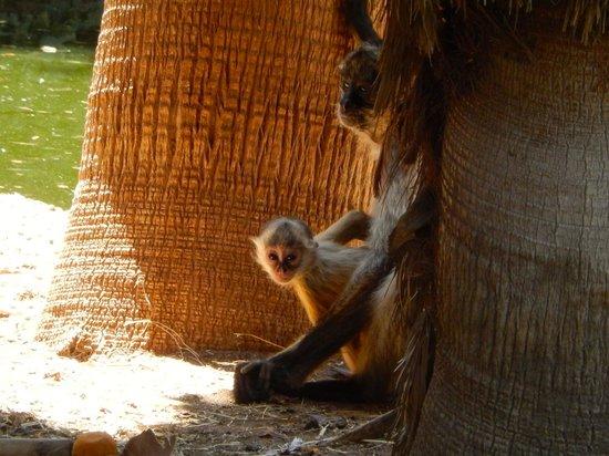 Wildlife World Zoo and Aquarium : Baby monkey
