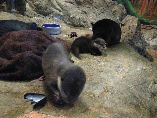 Wildlife World Zoo and Aquarium : Baby Asian otters