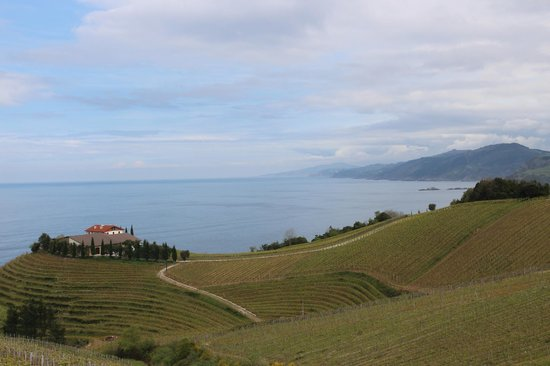 Basque Tours: Txakoli vinyard