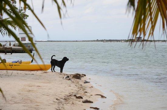 Isla Marisol Resort: Bowser guarding the island