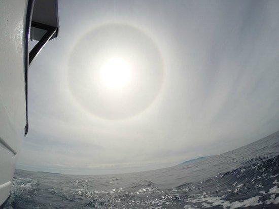 Full Dive: Heading back to port from Giannutri island.