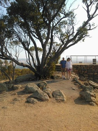 Mount Brown Lookout: Beautiful trees