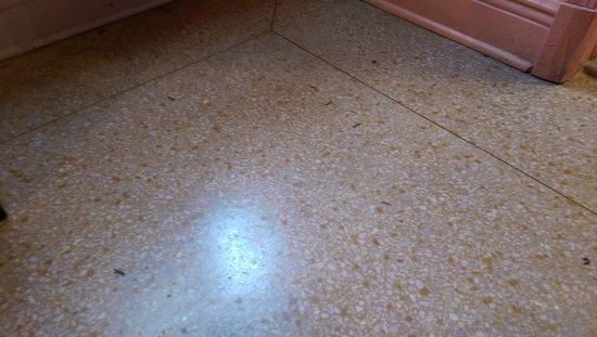 Hotel Biba : Room floor-several of the bugs