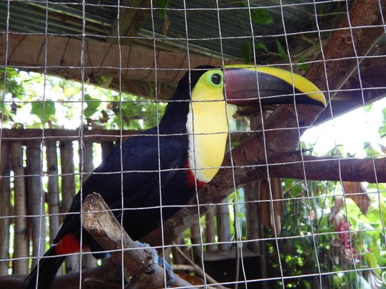 Toad Hall Hotel: Toucan