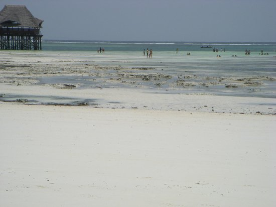 Dongwe Club : la spiaggia durante la bassa marea