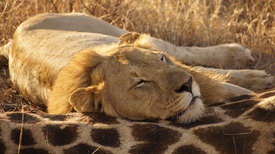 Impodimo Game Lodge: safari