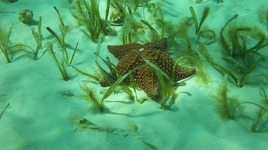 Cozumel H2O: Many starfish at the first stop