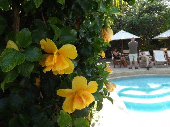 Hotel Silberstein: Jardín
