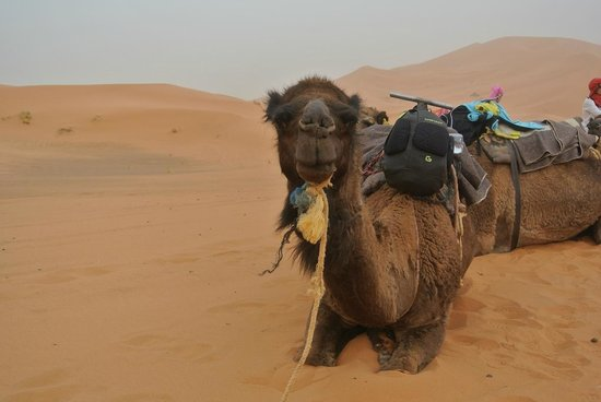 Dunes Expedition Tours: dune Merzouga