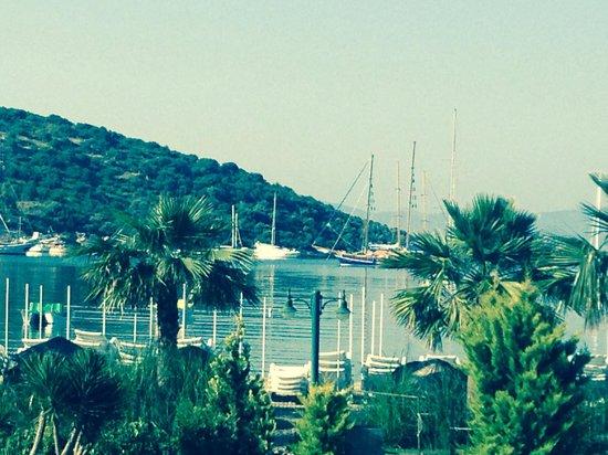 Ambrosia Hotel: Gardens leading to sea April 2014