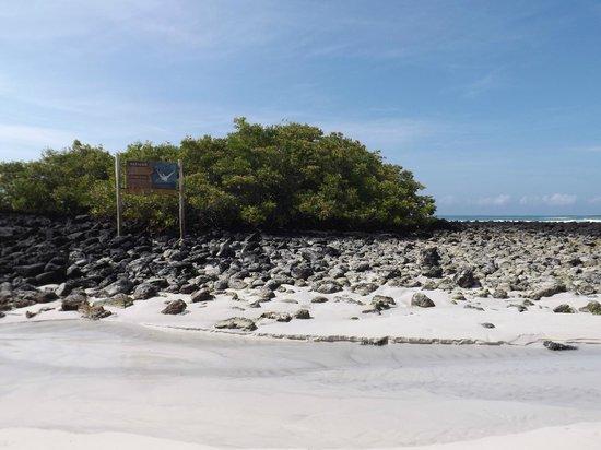 Galapagos Beach at Tortuga Bay: Paisaje