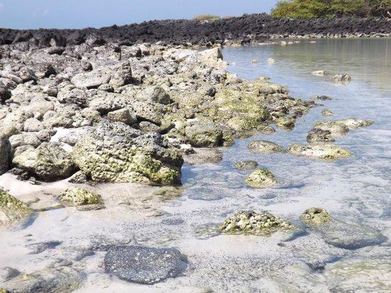 Galapagos Beach at Tortuga Bay: Rocas volcánicas y arena blanca
