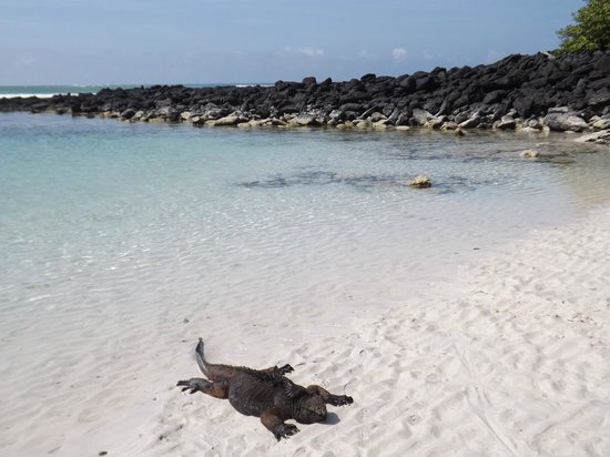 Galapagos Beach at Tortuga Bay: Transparencia y arena blanca