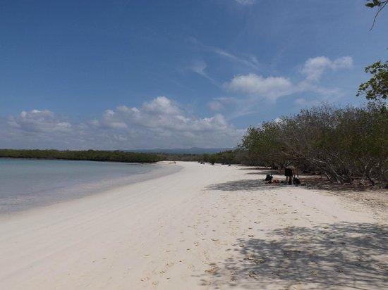 Galapagos Beach at Tortuga Bay: La mansa