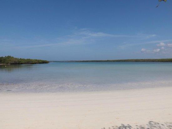Galapagos Beach at Tortuga Bay: La mansa en su esplendor