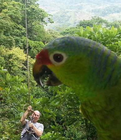 Osa Mountain Adventures : Watch out for the giant parrot! ... ha