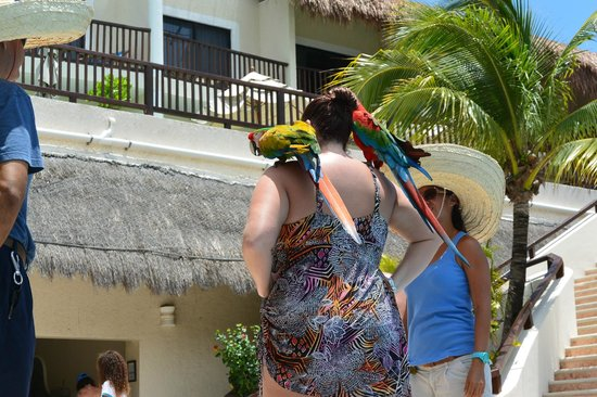 The Reef Coco Beach: wife taking pics by pool with parrots