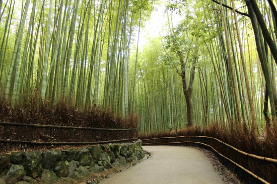 Tenryuji Temple: Love the bamboo grove