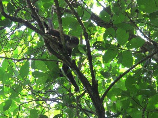 Casa Marbella: Spider Monkey