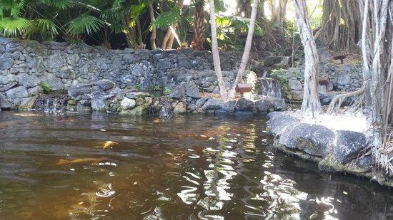 Bonaventure Resort & Spa : Swan lake